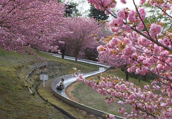 常陸大宮市やすらぎの里公園の画像mc17360