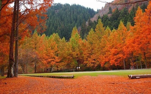 郡上八幡自然園の画像mc7543