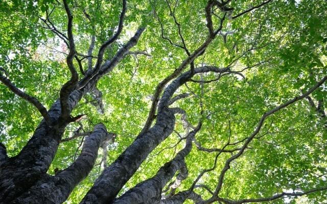 白山ブナの森キャンプ場の画像mc12837