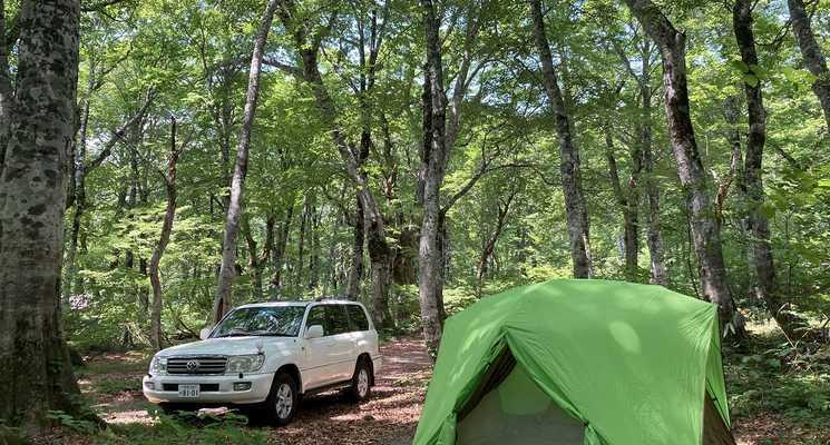 白山ブナの森キャンプ場の画像mc13007