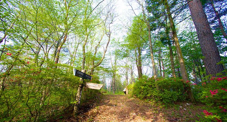 キャンピングビレッジ 登米森林公園の画像mc8682