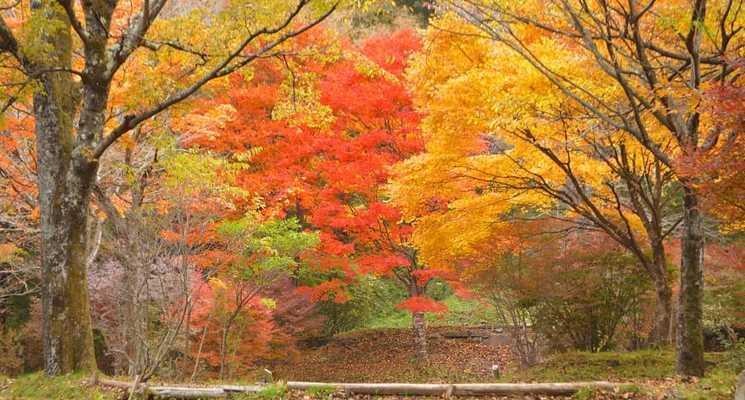 わらび平森林公園キャンプ場の画像mc4962