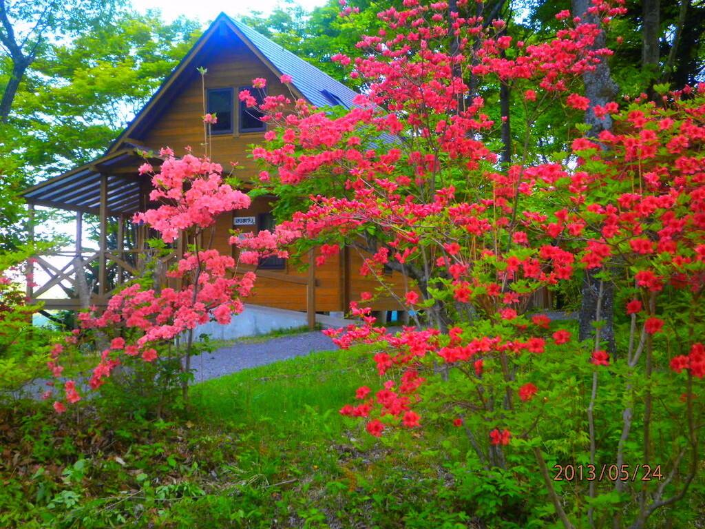 わらび平森林公園キャンプ場 の公式写真c4969