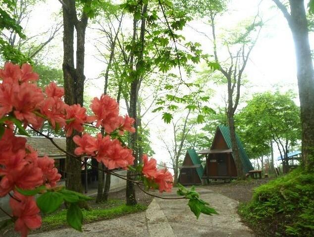 わらび平森林公園キャンプ場 の公式写真c4971