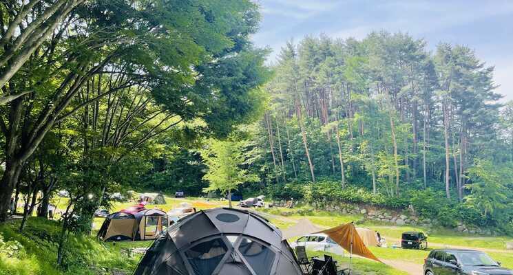 星の降る森の画像mc9896