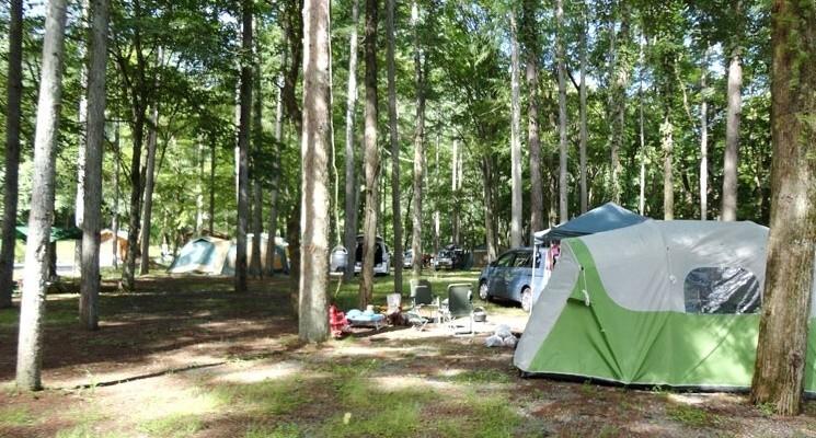 まほーばの森の画像mc3516
