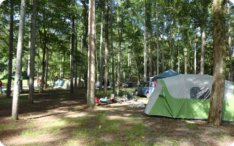 まほーばの森 の公式写真c3515