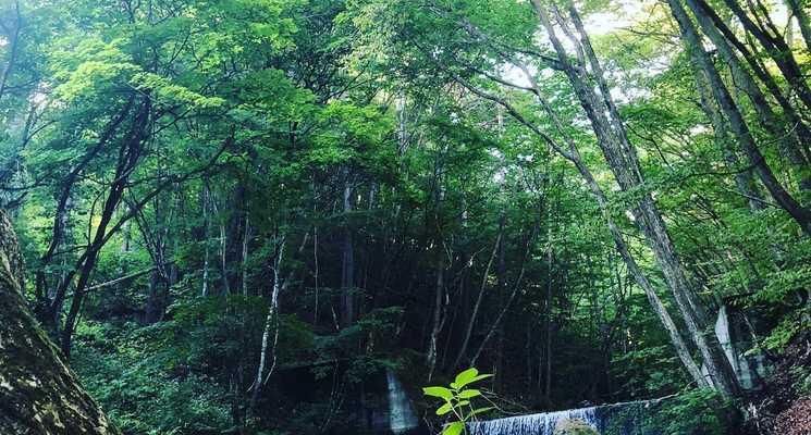 桐の木平キャンプ場の画像mc13266