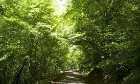 神石高原ティアガルテンの画像mc9579