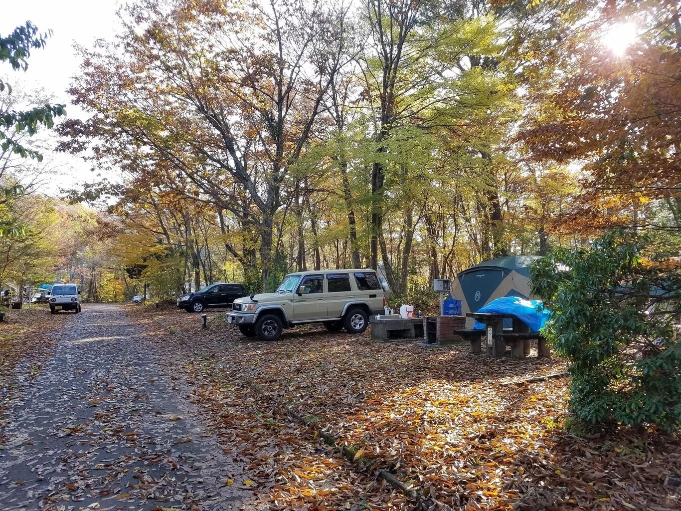もみのき森林公園オートキャンプ場 の公式写真c11245