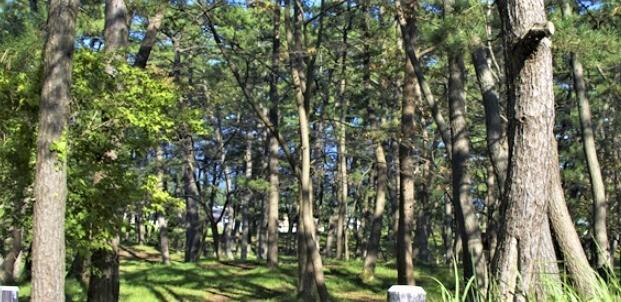 西浜コテージ村・キャンプ場の画像mc11303