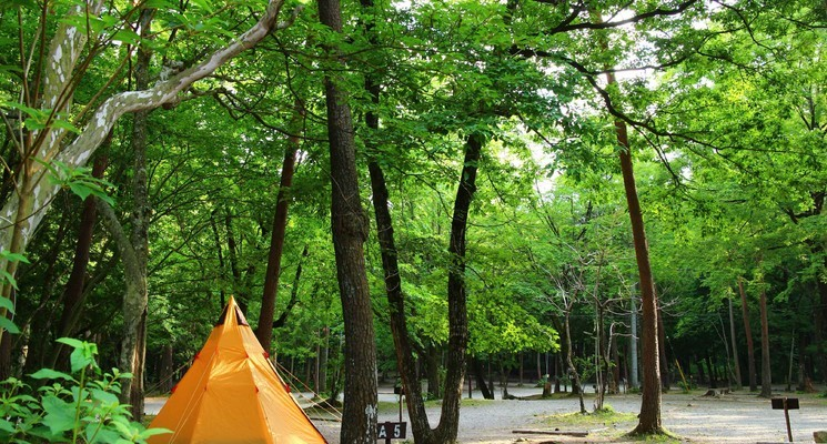 白州・尾白の森名水公園べるが 尾白の森キャンプ場 の画像mc11764