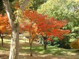 滋賀県希望が丘文化公園の画像mc5547