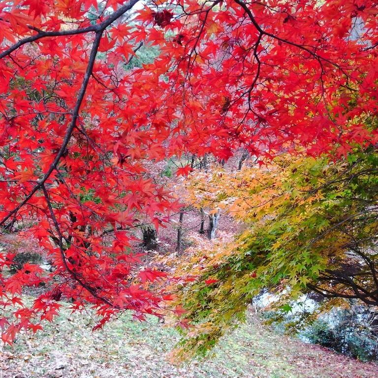滋賀県希望が丘文化公園 の公式写真c5562