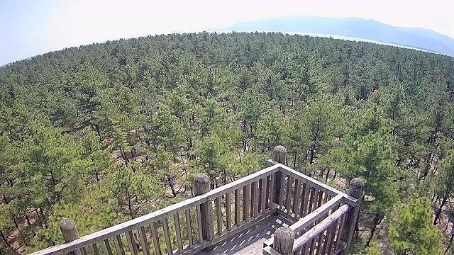 くにの松原キャンプ場の画像mc8653