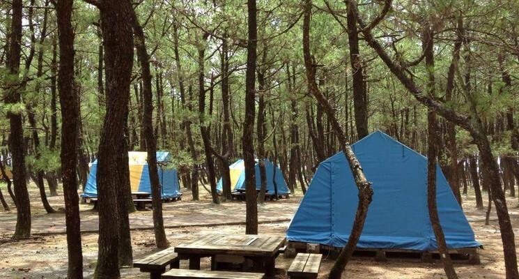 くにの松原キャンプ場の画像mc8654