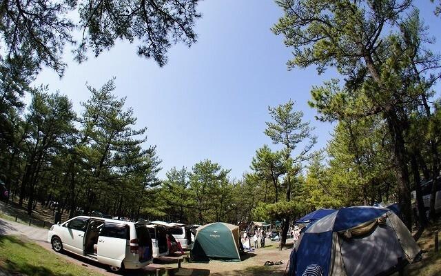 くにの松原キャンプ場の画像mc8657