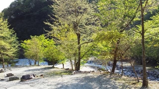 西丹沢 大滝キャンプ場 の公式写真c8645