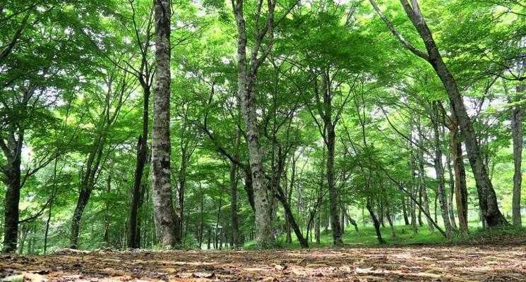 表富士グリーンキャンプ場の画像mc5100