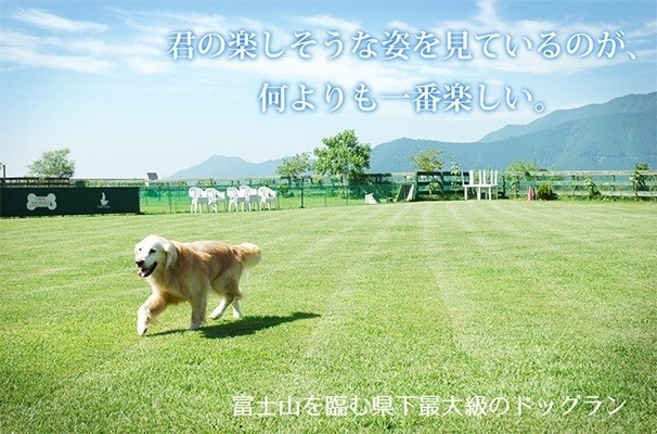 Field Dogs Gardenの画像mc3549