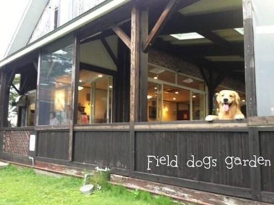 Field Dogs Gardenの画像mc3551