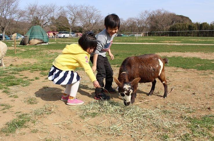 成田ゆめ牧場ファミリーオートキャンプ場 の公式写真c10968