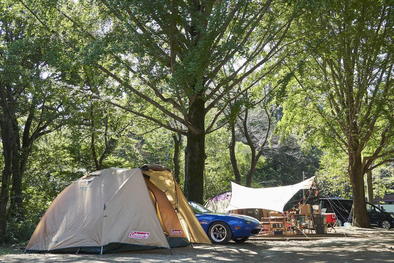 清水公園 キャンプ場 の公式写真c12670