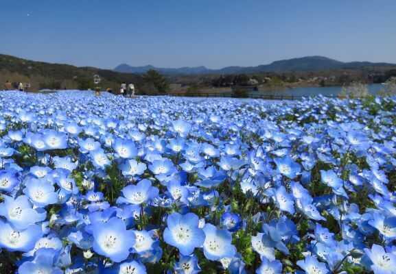 大分農業文化公園オートキャンプ場の画像mc15621