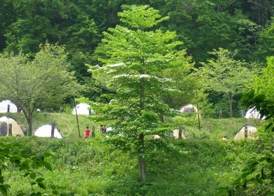 野尻湖高原キャンプ場の画像mc4171