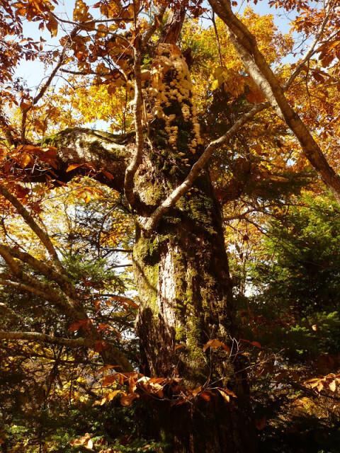 千年の森自然学校 の公式写真c714