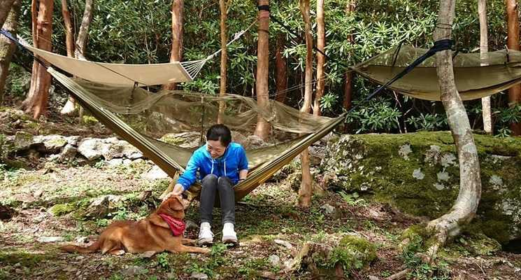 四国山岳植物園岳人の森の画像mc16978
