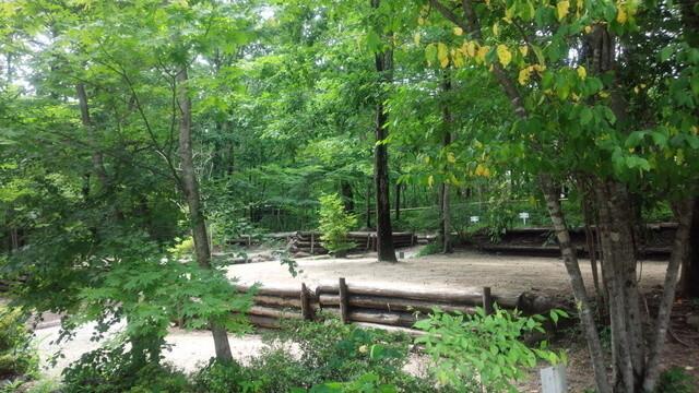 メープル那須高原キャンプグランドの画像mc4024