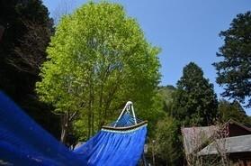 丹波悠遊の森 の公式写真c2548