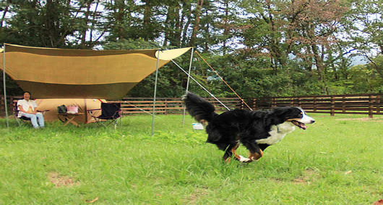 神鍋高原キャンプ場の画像mc8531