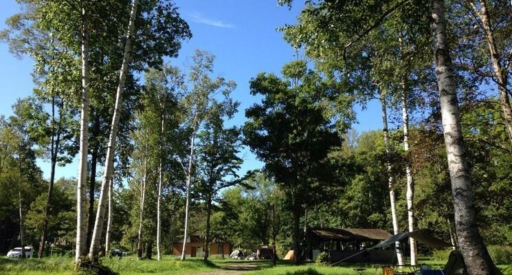 ニニウキャンプ場の画像mc3578