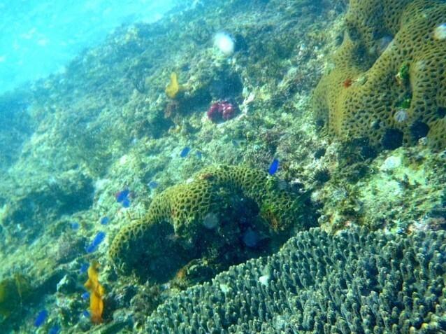 リゾート大島 の公式写真c2631