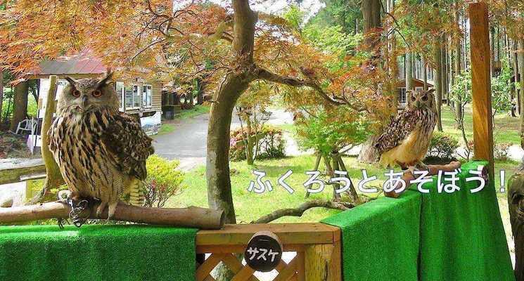 細野高原ツリーハウス村キャンプ場の画像mc11568