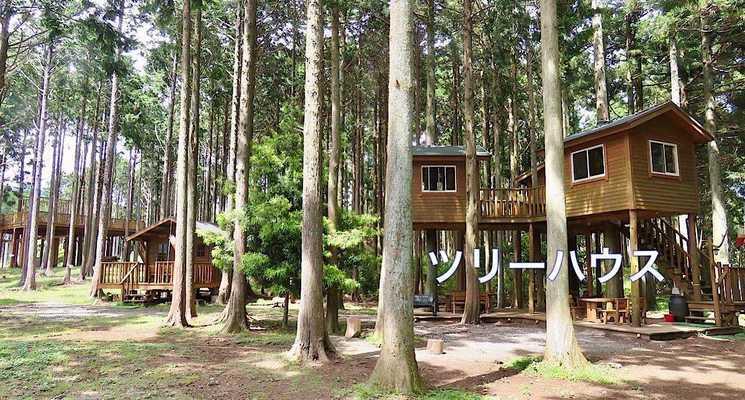 細野高原ツリーハウス村キャンプ場の画像mc11569
