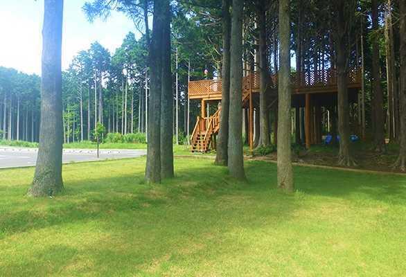 細野高原ツリーハウス村キャンプ場の画像mc11571