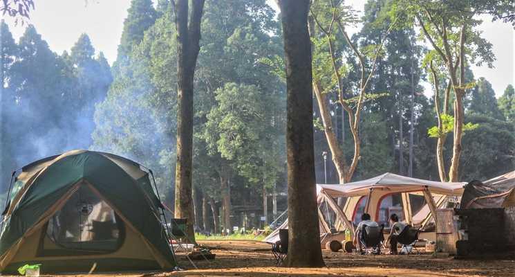 昭和の森フォレストビレッジの画像mc4547