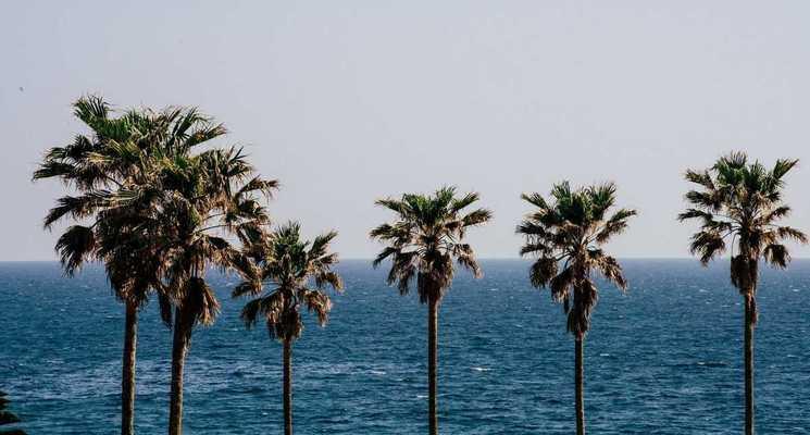 白浜フラワーパークの画像mc4601