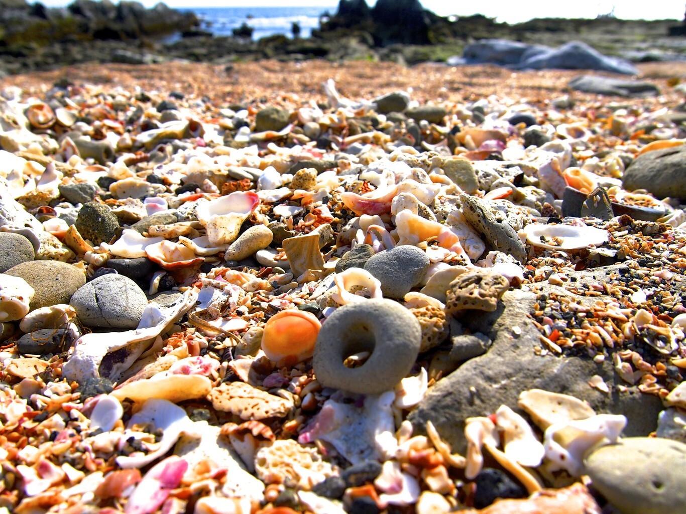 白浜フラワーパーク の公式写真c4610