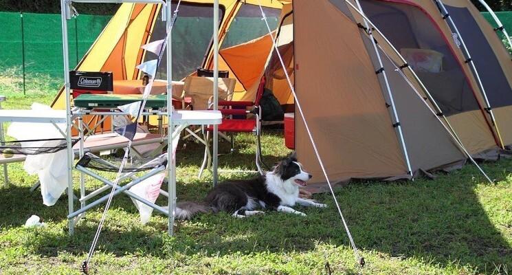 星降るWAN-WAキャンプ場の画像mc6485