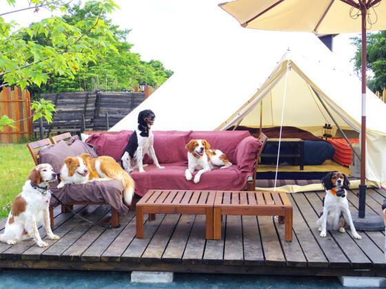 Glee Club(グリークラブ)/犬と星見るグランピングサイト の公式写真c7078