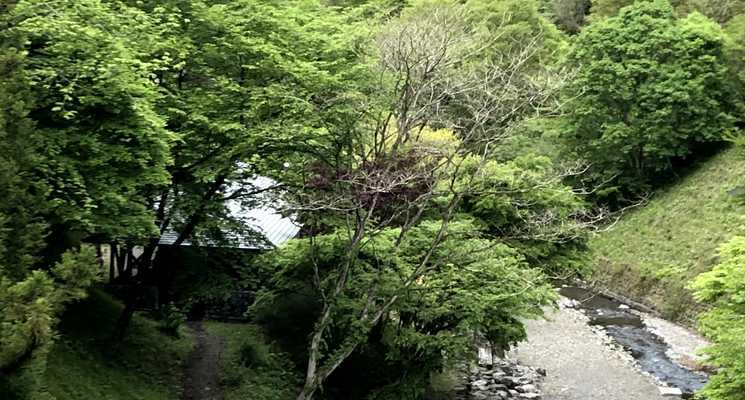 原始村そば処キャンプ場~日本最古のゲストハウス~の画像mc8059