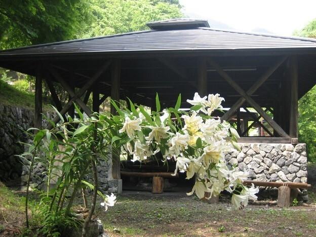 原始村そば処キャンプ場~日本最古のゲストハウス~ の公式写真c12579