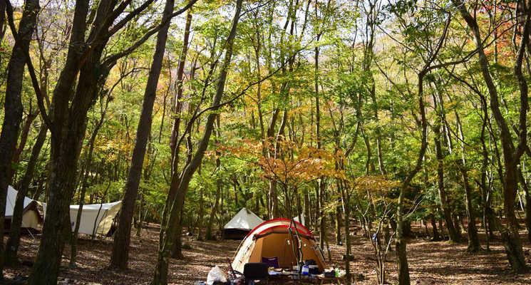SUMIKA CAMP FIELDの画像mc9981