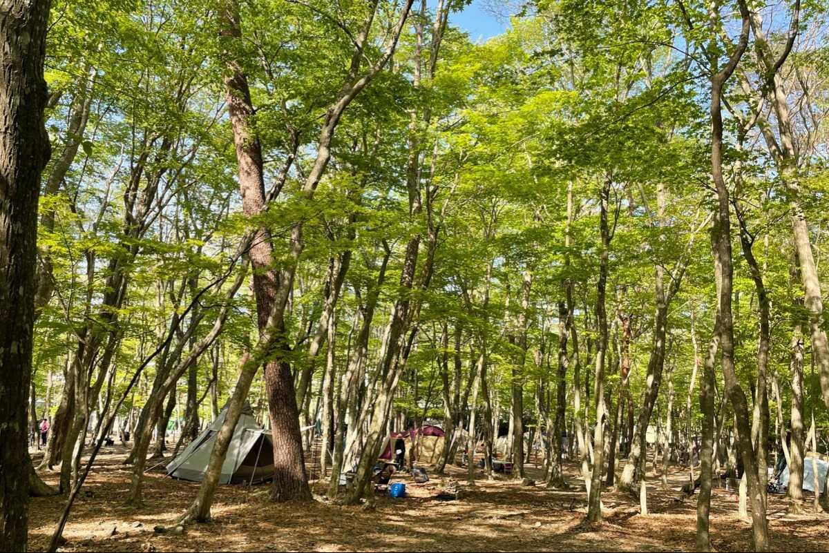 写真 - 本栖湖 SUMIKA CAMP FIELD [ なっぷ ] | 日本最大級のキャンプ場検索・予約サイト【なっぷ】