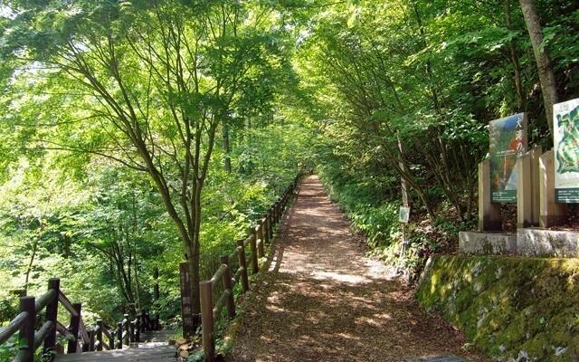 北秋川自然休暇村の画像mc9686