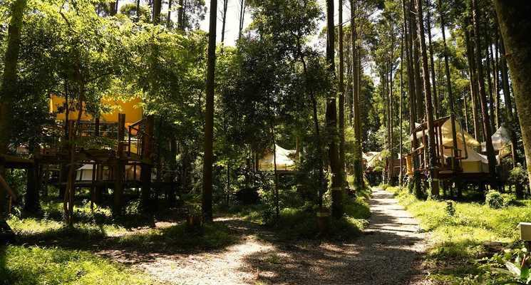 Camping GREEN(キャンピンググリーン)の画像mc14249